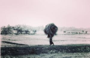 Man with Hay , Bangladesh