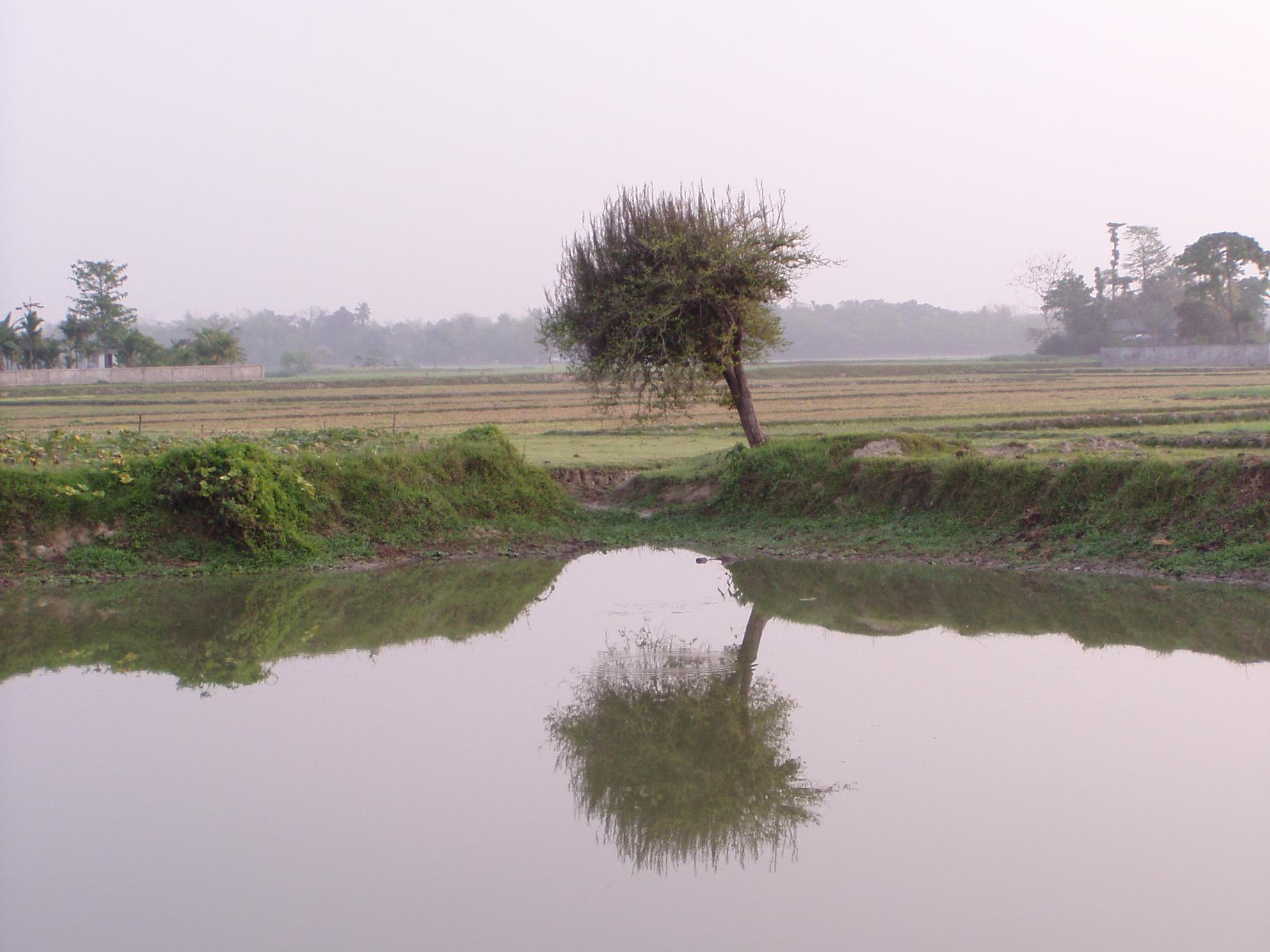 Bangladesh : water pond