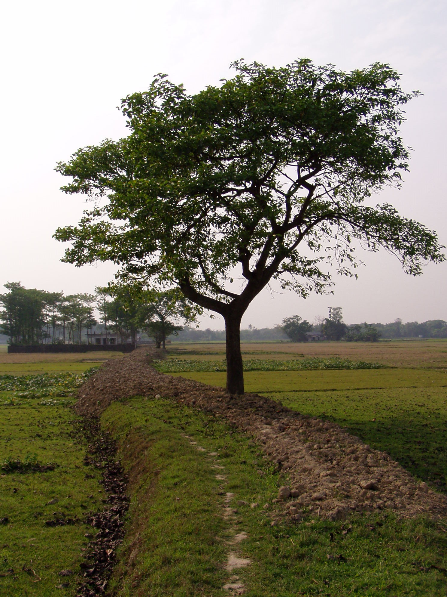 Village footpath