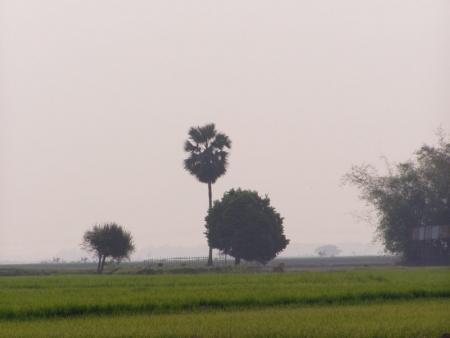 Sylhet landscape