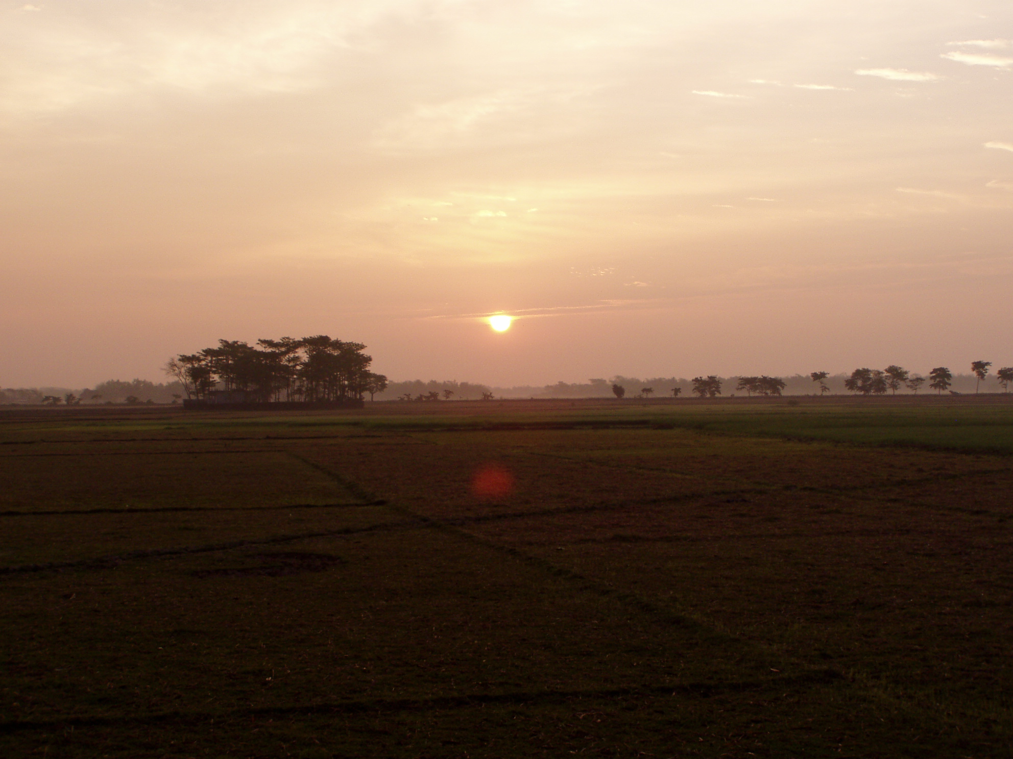 Bangladesh : sun rise and trees