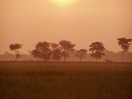 Bangladesh : village morning  paddy field