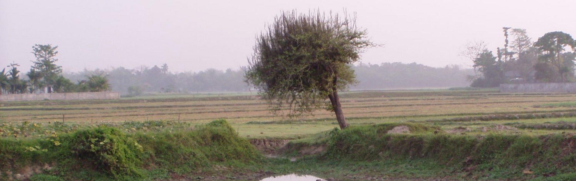 Bdeshi Photography