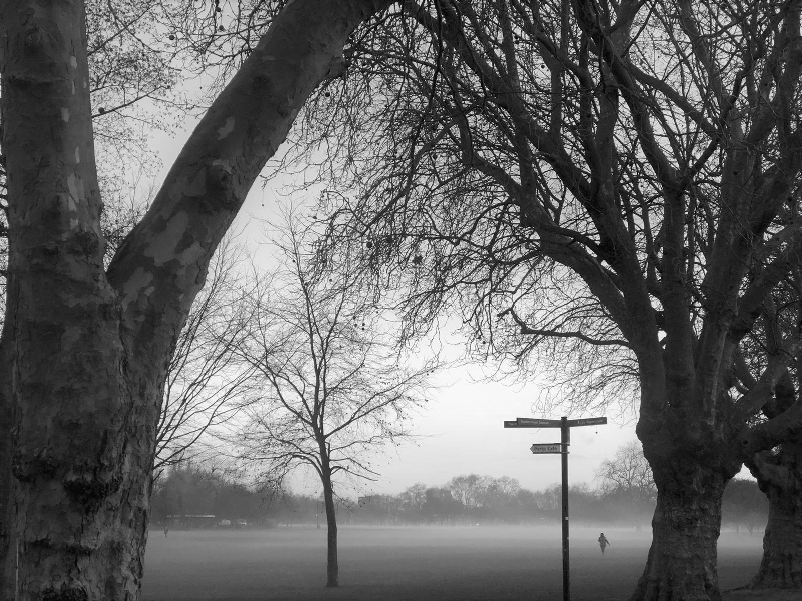 Fog park